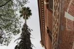 An exterior palm