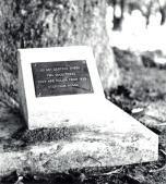 P 10, 1963, Plaque at Base of one of the Kurrajong Trees