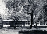 P 42, 1963, Medical residence, built 1964 by G A Rippin, 2 Mulberry trees L foreground